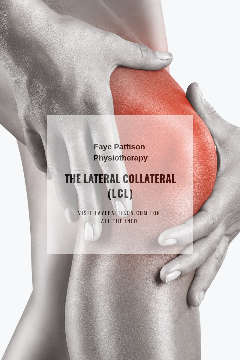 LCL Lateral Collateral Ligament